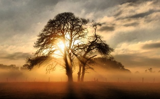 tree-sunset-light-clouds-field-fence-nature