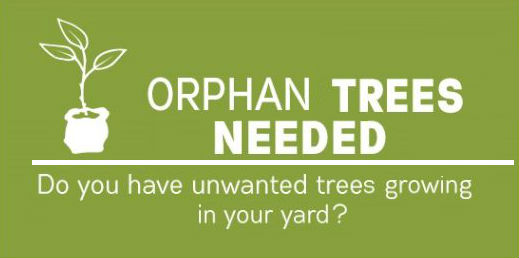 OrphanTreeProgram